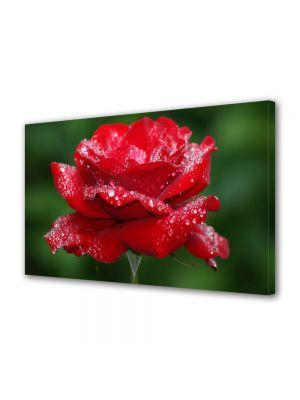 Tablou Canvas Flori Fir de trandafir plouat
