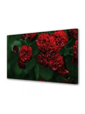 Tablou Canvas Flori Florile dragostei