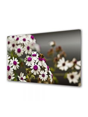 Tablou Canvas Flori Albina pe Flori Albe cu Violet
