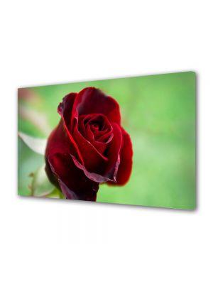 Tablou Canvas Luminos in intuneric VarioView LED Flori Fir rosu de trandafir