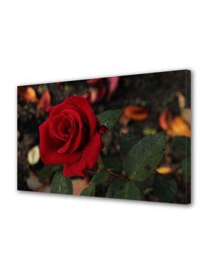 Tablou Canvas Flori Floarea iubirii