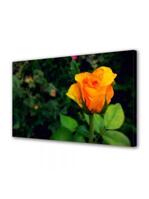 Tablou Canvas Luminos in intuneric VarioView LED Flori Mugure de trandafir galben