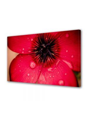 Tablou Canvas Flori Floare caramizie