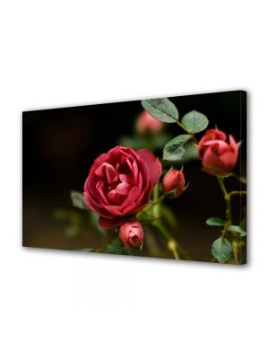 Tablou Canvas Luminos in intuneric VarioView LED Flori Muguri de trandafir