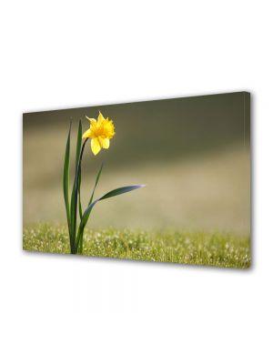 Tablou Canvas Flori Narcisa singuratica