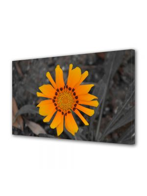 Tablou Canvas Flori Floare a soarelui