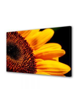 Tablou Canvas Flori Florea soarelui in detaliu