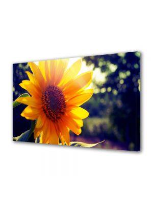 Tablou Canvas Flori Soare puternic si floarea acestuia