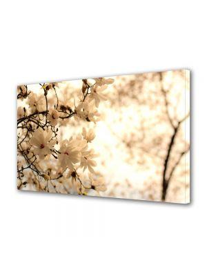 Tablou Canvas Flori Copac inflorit