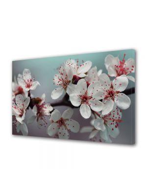 Tablou Canvas Flori Flori de pom fructifer