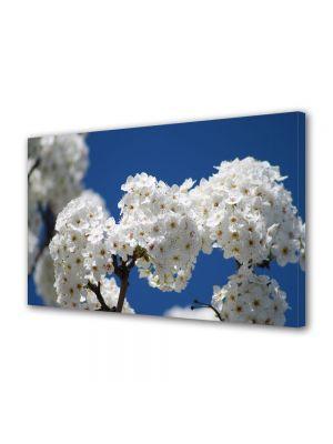Tablou VarioView MoonLight Fosforescent Luminos in intuneric Flori Flori albe de pom