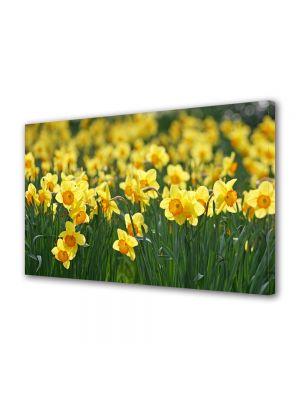 Tablou Canvas Luminos in intuneric VarioView LED Flori Narcise galbuie