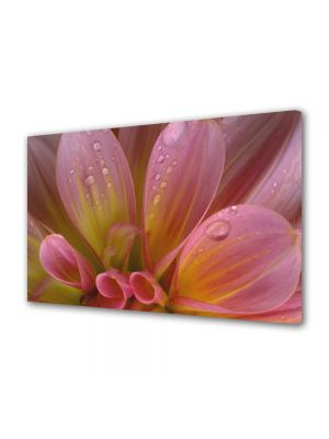 Tablou Canvas Flori Petale si roua