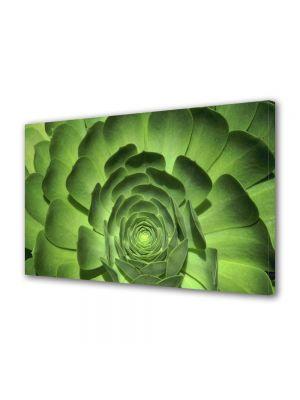 Tablou Canvas Flori Floare cu petale verzi