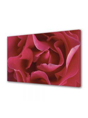 Tablou Canvas Flori Petale subtirele