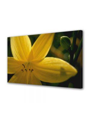 Tablou Canvas Flori Floare galbena