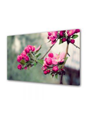 Tablou Canvas Flori Frumusetea naturii