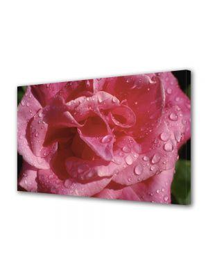 Tablou Canvas Flori Floare dupa averse