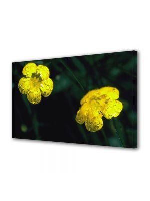 Tablou Canvas Flori Doua floricele galbene