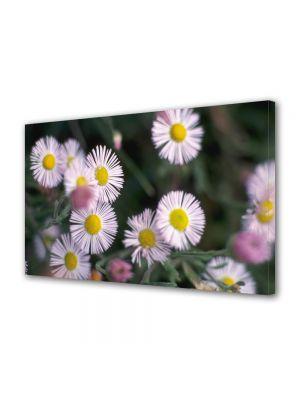 Tablou Canvas Flori Flori de vara