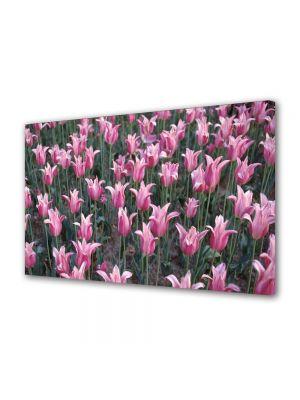 Tablou Canvas Flori Flori pe camp