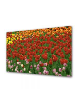 Tablou Canvas Flori Coloritul florilor