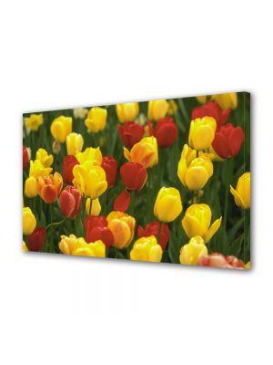 Tablou Canvas Flori Lalele Galbene si Rosii