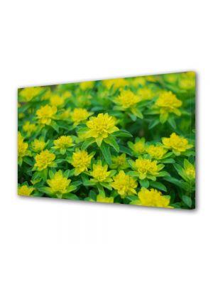 Tablou Canvas Flori Floricele curioase