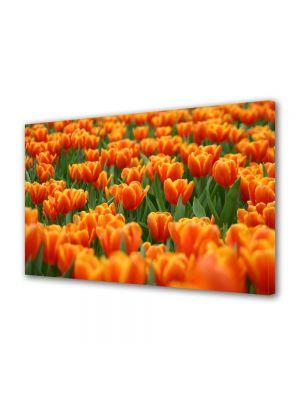 Tablou Canvas Flori Lalele portocalii