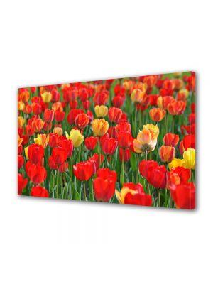 Tablou Canvas Flori Miros de lalele