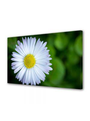 Tablou Canvas Flori Floare curioasa