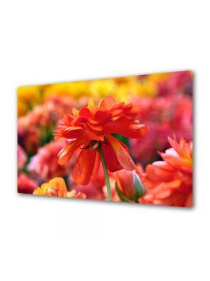 Tablou Canvas Luminos in intuneric VarioView LED Flori Nuante de rosu