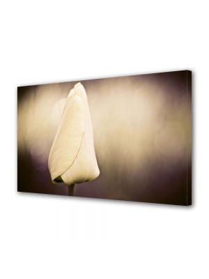 Tablou Canvas Flori Mugure de lalea alba