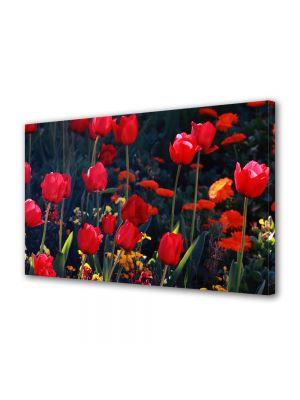 Tablou Canvas Flori Lalele in gradina