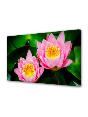 Tablou Canvas Flori Lilieci de apa