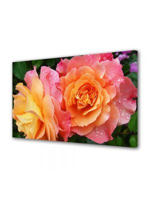 Tablou Canvas Flori Trandafiri in gradina