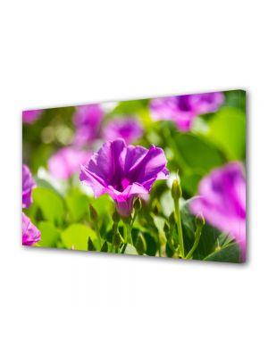 Tablou Canvas Flori Violet strident
