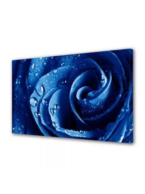 Tablou Canvas Flori Trandafir albastru