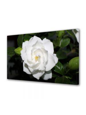 Tablou Canvas Luminos in intuneric VarioView LED Flori Floare alba