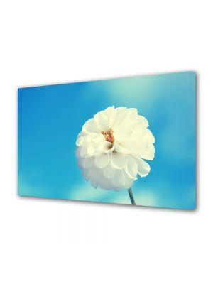 Tablou Canvas Flori Floricica alba