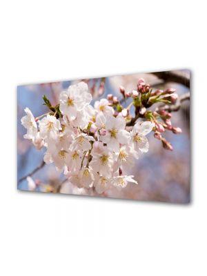 Tablou Canvas Flori Flori albe japoneze
