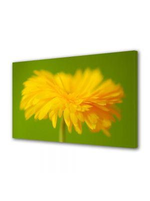 Tablou Canvas Flori In prim plan