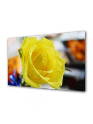 Tablou Canvas Flori Trandafir galben singuratic