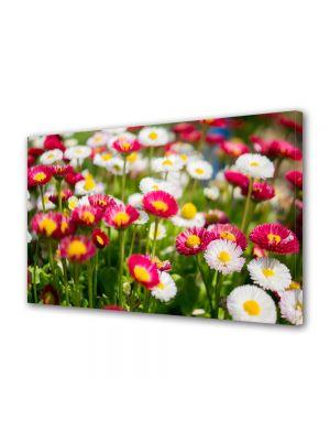 Tablou Canvas Flori Margarete colorate