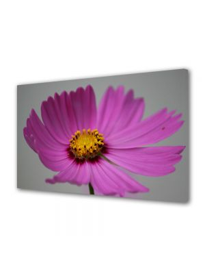 Tablou Canvas Flori Floare Cosmo