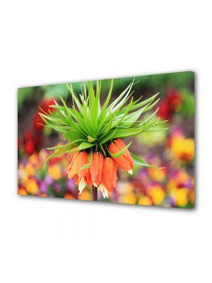 Tablou Canvas Flori Floare Exotica Bokeh