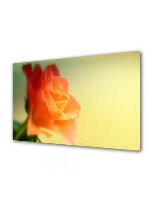 Tablou Canvas Flori Trandafir visator