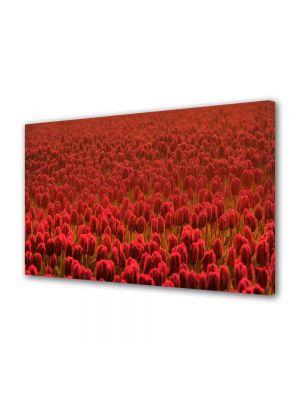 Tablou Canvas Flori Lalele rosii Scarlet