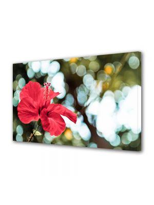 Tablou Canvas Luminos in intuneric VarioView LED Flori Floare firava