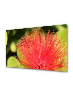 Tablou Canvas Flori Floare aparte